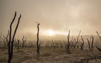 dead-trees-947331_640.jpg